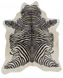 Zebra Spine on White
